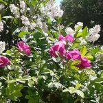 Цветочная косметика: цветы против проблем кожи лица